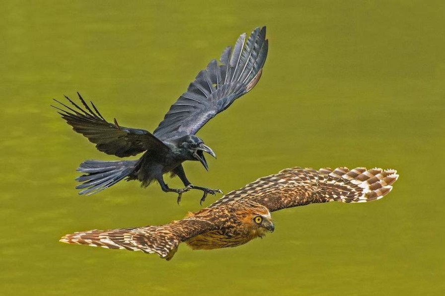National Geographic, құс