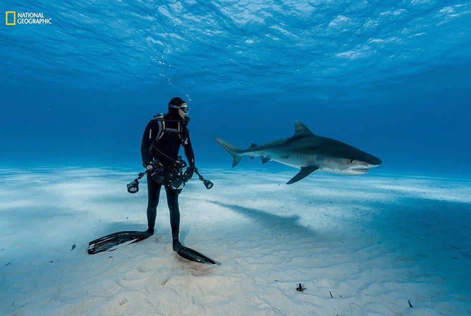 National Geographic, акула