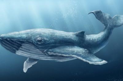Көк кит, тыныш үй