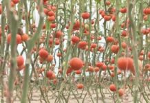 Органикалық өнім