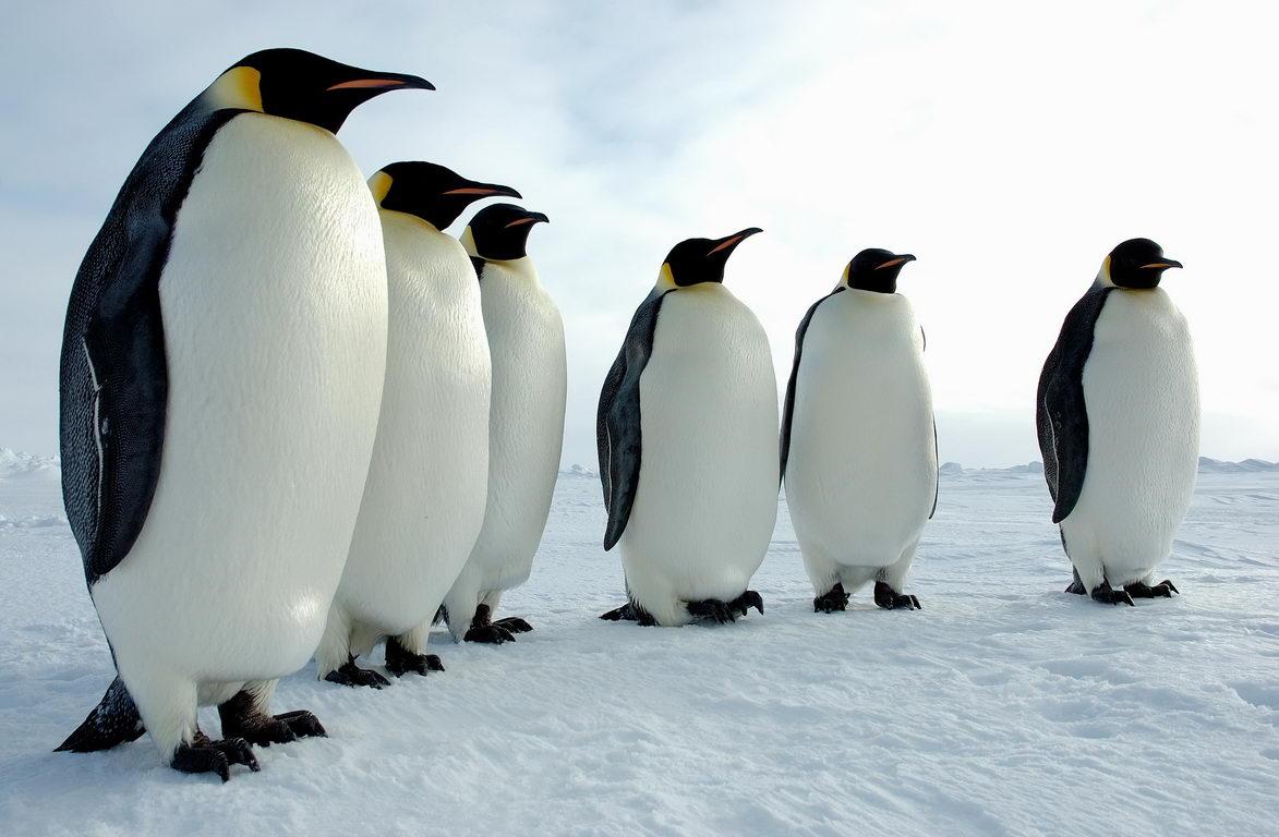 Пингвиндер