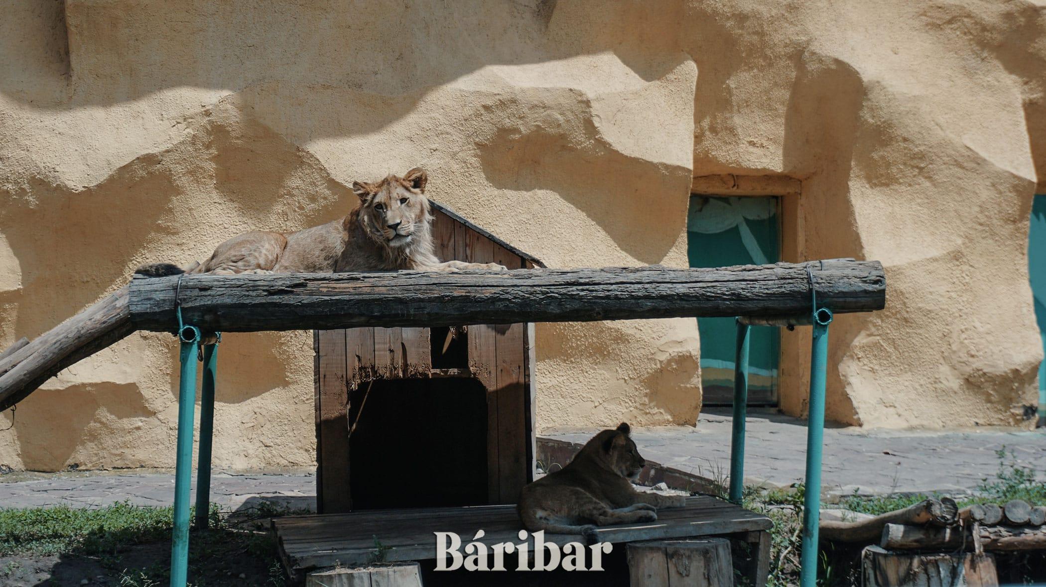 Арыстан Алматы зоопрак