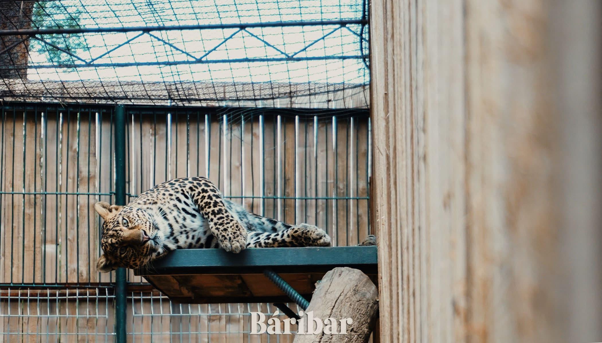 леопарт Алматы зоопрак