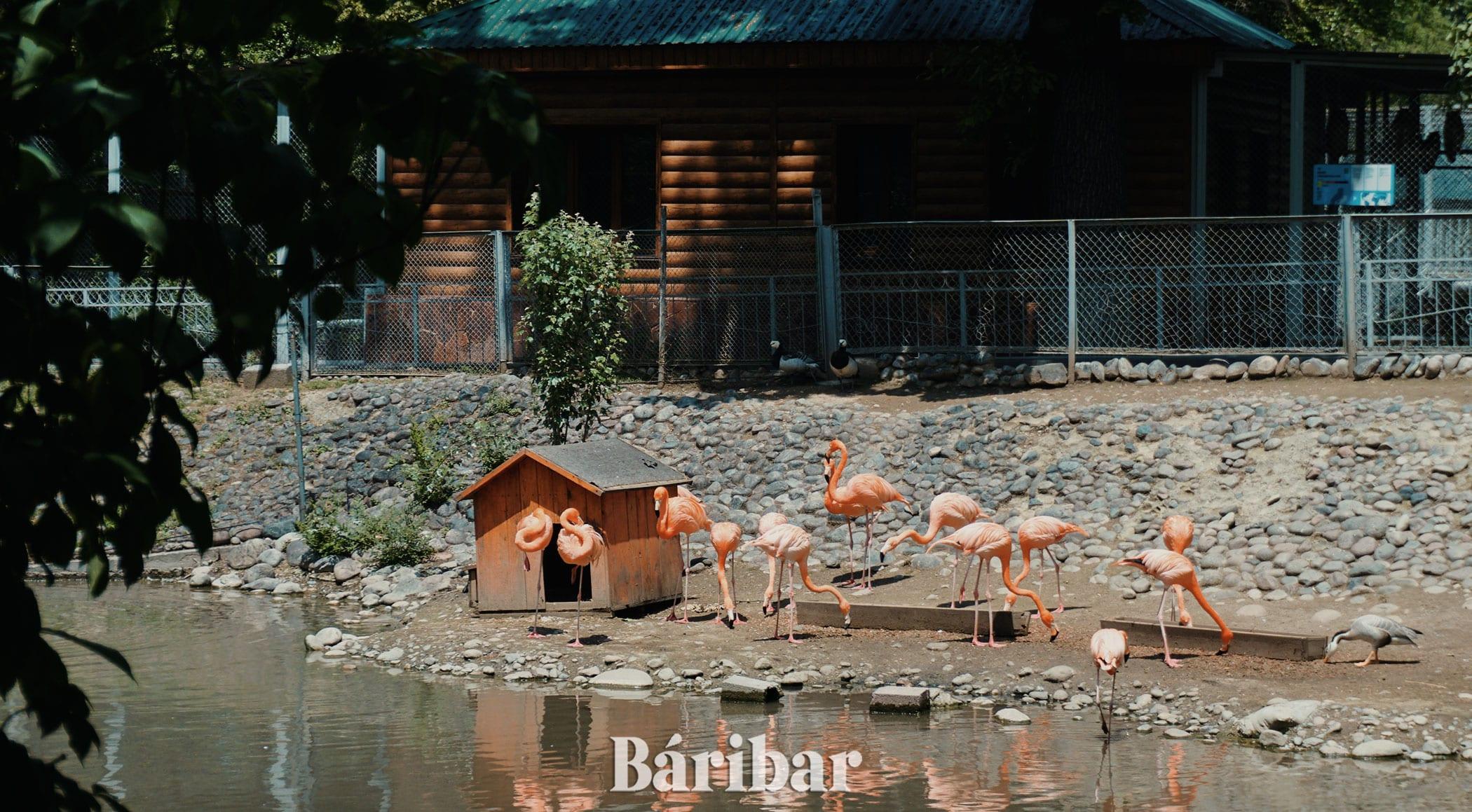 Қоқиқаз фламинго Алматы зоопрак