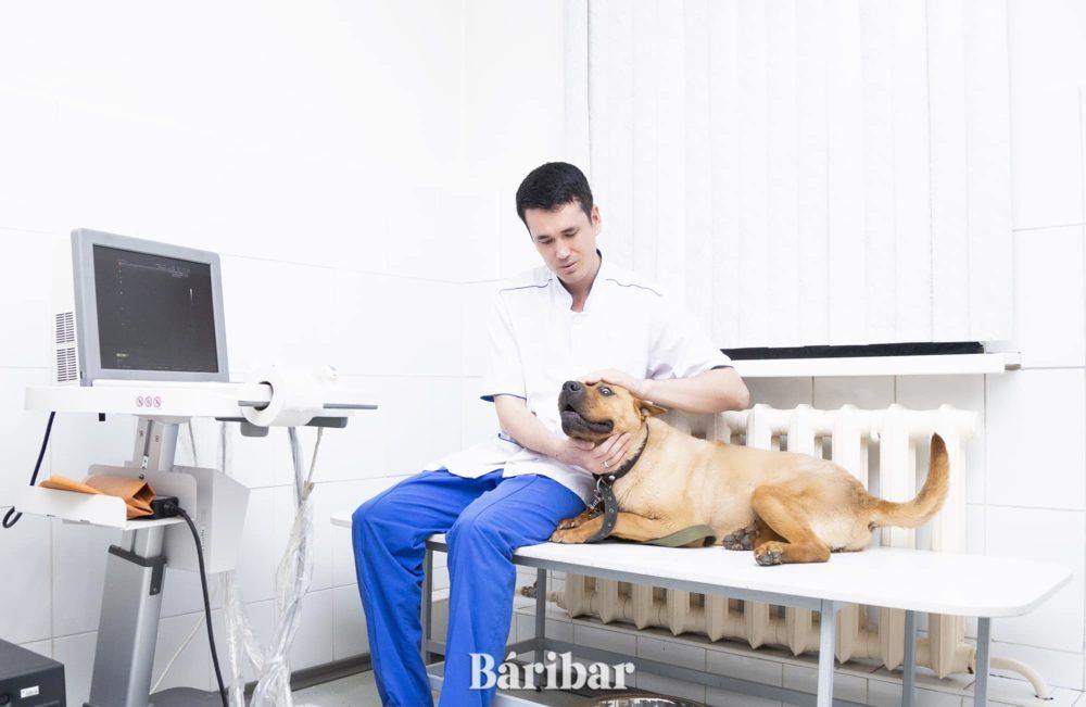 Ветеринар Дархан Тілеужанов
